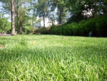 Kan uitvaart in eigen tuin
